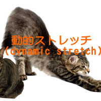 dynamic-stretch