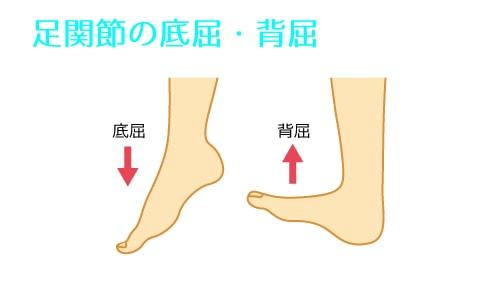 足関節の底屈・背屈