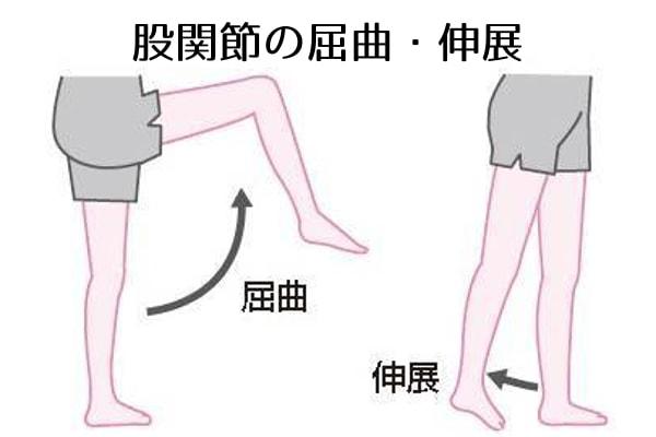 股関節の屈曲・伸展