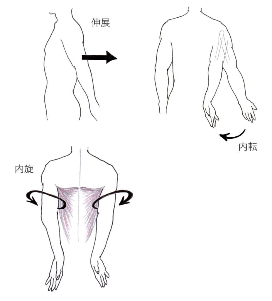 広背筋作用
