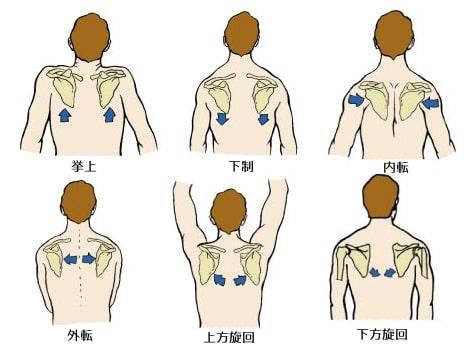 肩甲骨の動き1
