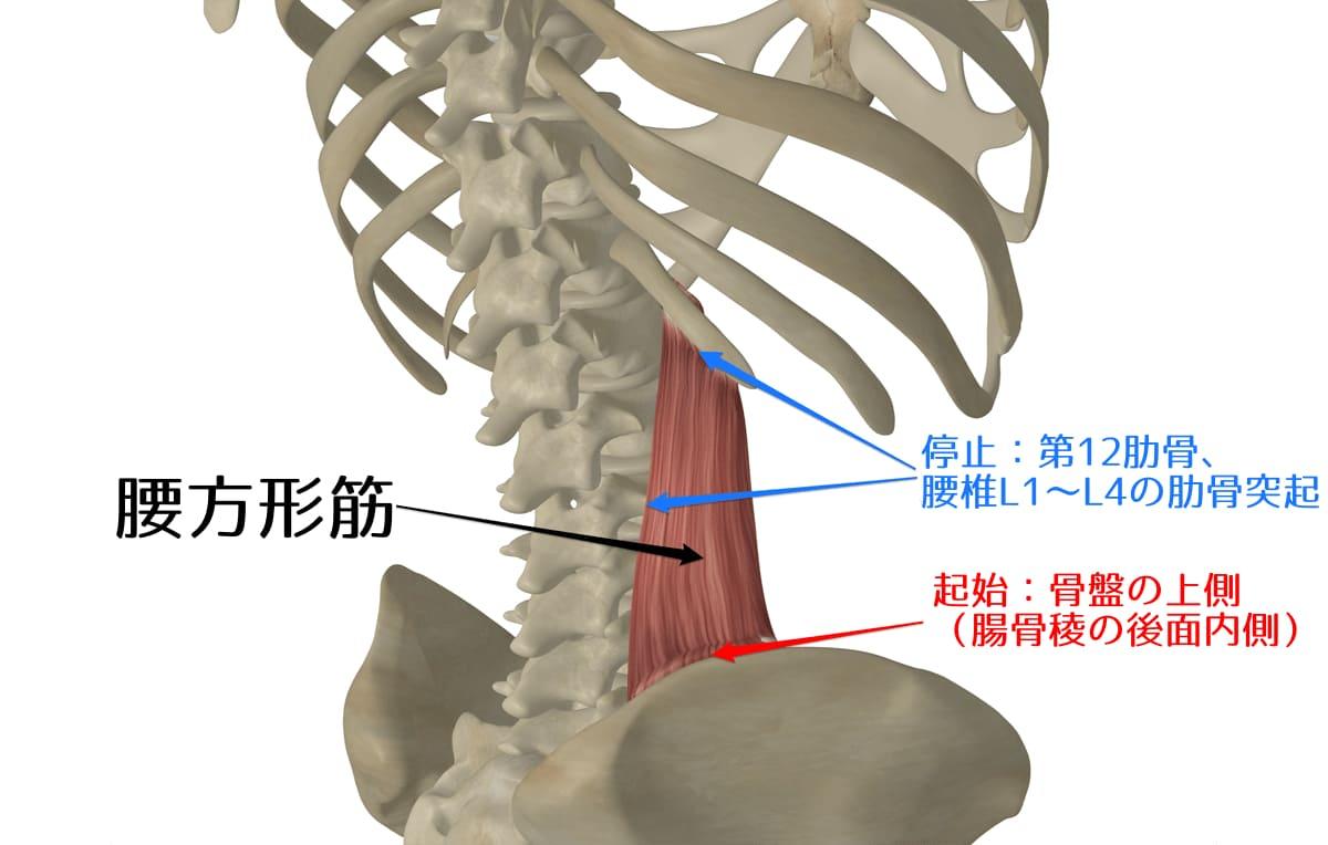 腰方形筋2